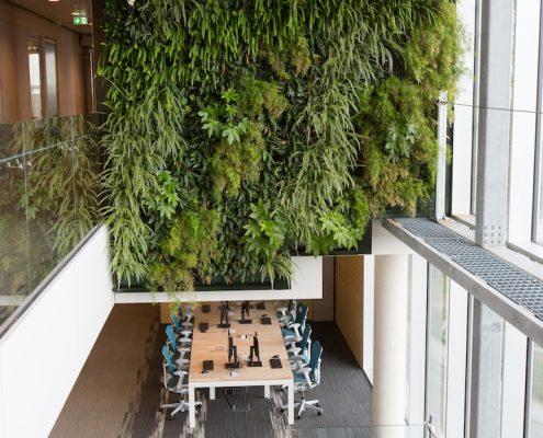 Planten Op Kantoor : De planten in het kantoor zuiveren de lucht c c venlo
